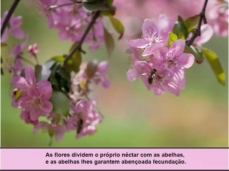 A árvore divide os frutos com os homens, e os homens lhes estendem a espécie através do espaço e do tempo.
