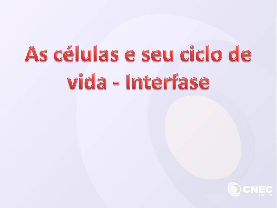 Interfase Divisão celular