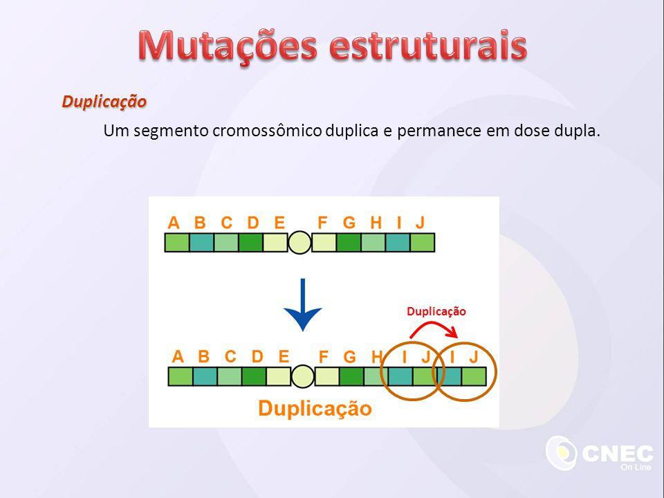 Duplicação Um segmento cromossômico duplica e permanece em dose dupla. Duplicação