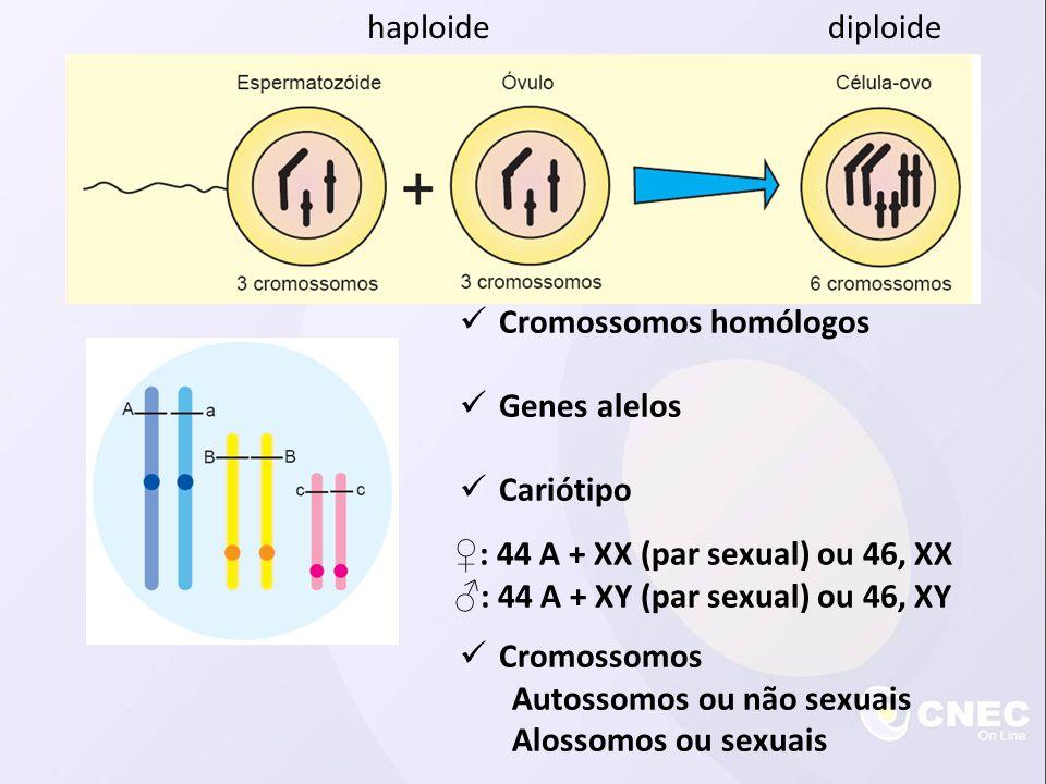 Cromossomos homólogos Genes alelos Cariótipo Cromossomos Autossomos ou não sexuais Alossomos ou sexuais : 44 A + XX (par sexual) ou 46, XX : 44 A + XY