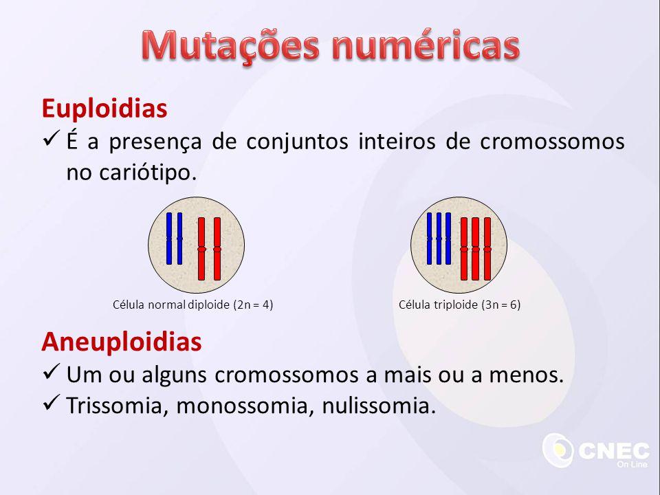 Euploidias É a presença de conjuntos inteiros de cromossomos no cariótipo. Célula normal diploide (2n = 4)Célula triploide (3n = 6) Aneuploidias Um ou