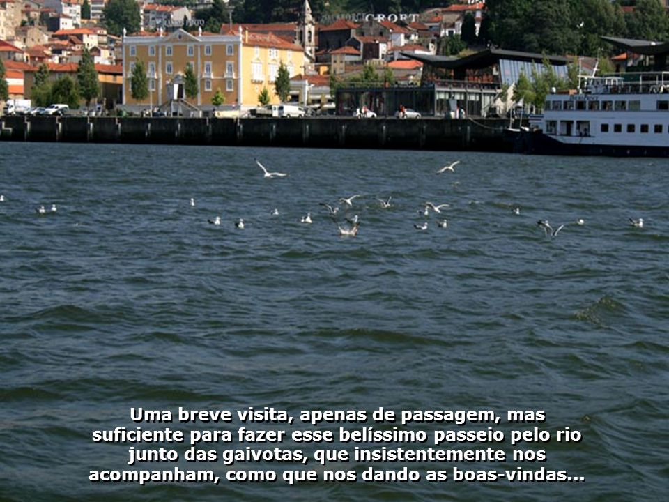 Vamos para um passeio pelo Rio Douro, que corta a cidade do Porto, em Portugal, pelo remanso de suas águas, tendo por companhia as lindas gaivotas...