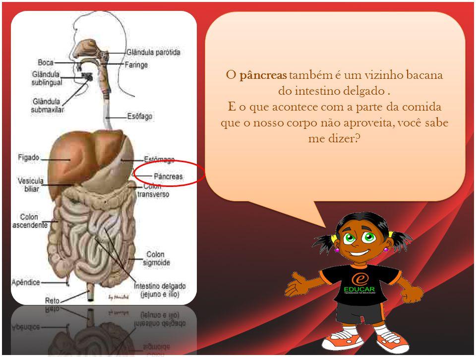 O pâncreas também é um vizinho bacana do intestino delgado.