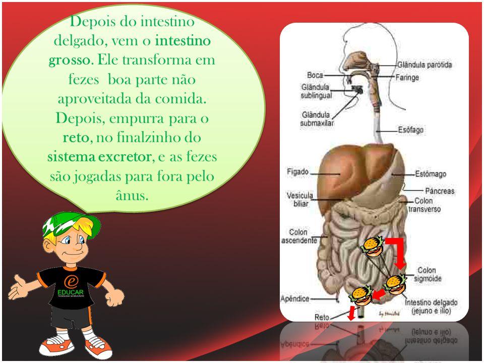 Depois do intestino delgado, vem o intestino grosso.