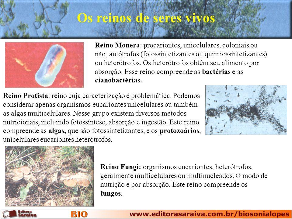 Os reinos de seres vivos Reino Monera: procariontes, unicelulares, coloniais ou não, autótrofos (fotossintetizantes ou quimiossintetizantes) ou heteró