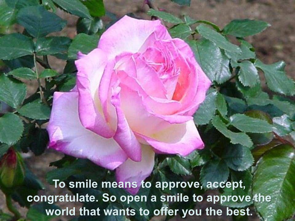 Sorrir significa aprovar, aceitar, felicitar. Então abra um sorriso para aprovar o mundo que te quer oferecer o melhor.