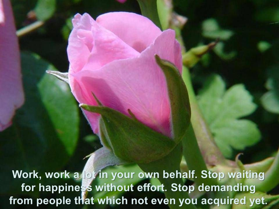 Trabalha, trabalha muito a seu favor. Pare de esperar a felicidade sem esforços. Pare de exigir das pessoas aquilo que nem você conquistou ainda.
