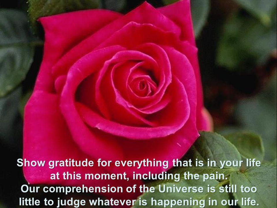Agradeça tudo que está em sua vida nesse momento, inclusive a dor. Nossa compreensão do universo, ainda é muito pequena para julgar o que quer que sej