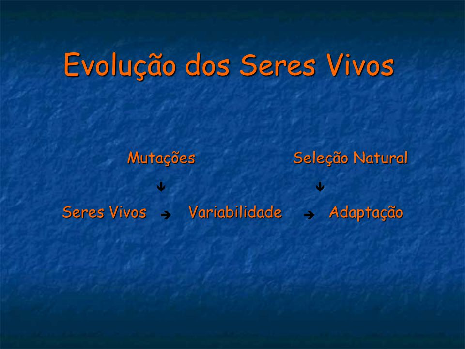 Seres Vivos Variabilidade Adaptação Evolução dos Seres Vivos Mutações Seleção Natural