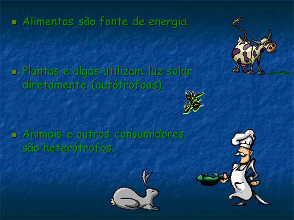 Alimentos são fonte de energia. Alimentos são fonte de energia. Plantas e algas utilizam luz solar diretamente (autótrofoas). Plantas e algas utilizam