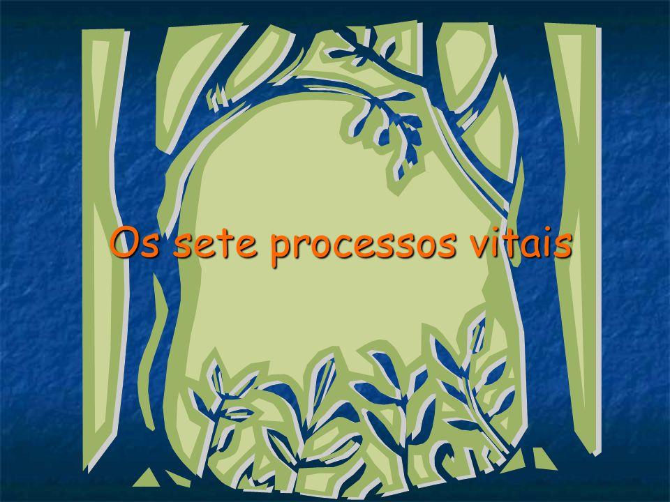 Os sete processos vitais