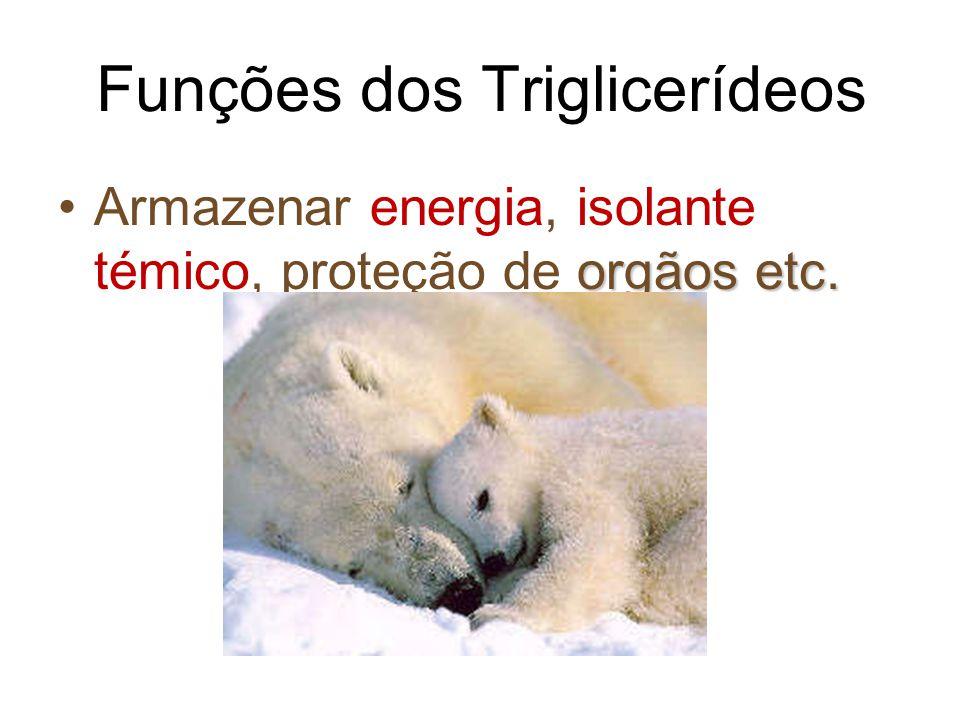 4 Funções dos Triglicerídeos orgãos etc.Armazenar energia, isolante témico, proteção de orgãos etc.