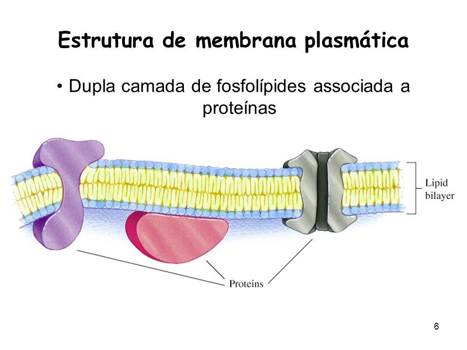 6 Estrutura de membrana plasmática Dupla camada de fosfolípides associada a proteínas