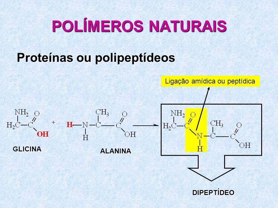 POLÍMEROS NATURAIS Proteínas ou polipeptídeos GLICINA ALANINA Ligação amídica ou peptídica DIPEPTÍDEO