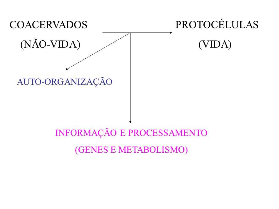 COACERVADOS PROTOCÉLULAS (NÃO-VIDA) (VIDA) AUTO-ORGANIZAÇÃO