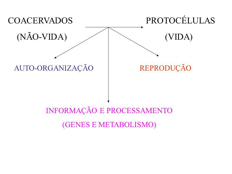 COACERVADOS PROTOCÉLULAS (NÃO-VIDA) (VIDA) AUTO-ORGANIZAÇÃO INFORMAÇÃO E PROCESSAMENTO (GENES E METABOLISMO)