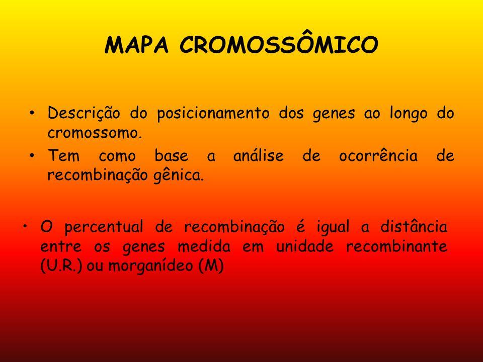 MAPA CROMOSSÔMICO Descrição do posicionamento dos genes ao longo do cromossomo. Tem como base a análise de ocorrência de recombinação gênica. O percen