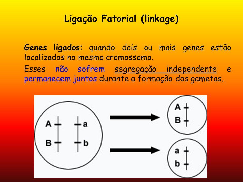 Ligação Fatorial (linkage) Genes ligados: quando dois ou mais genes estão localizados no mesmo cromossomo. Esses não sofrem segregação independente e