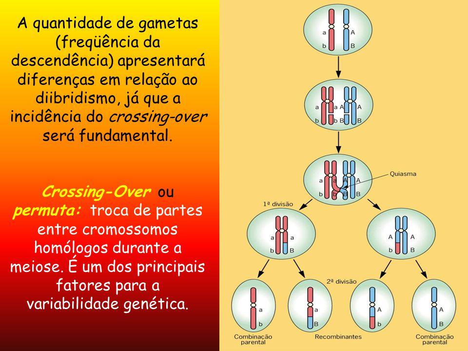 A quantidade de gametas (freqüência da descendência) apresentará diferenças em relação ao diibridismo, já que a incidência do crossing-over será funda