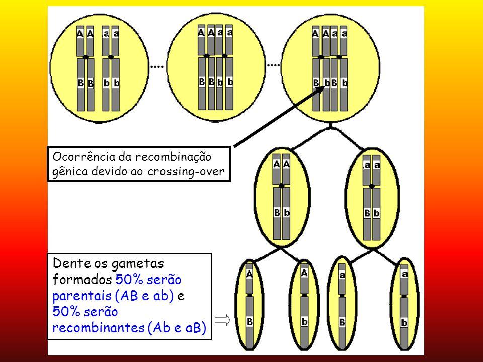 Ocorrência da recombinação gênica devido ao crossing-over Dente os gametas formados 50% serão parentais (AB e ab) e 50% serão recombinantes (Ab e aB)