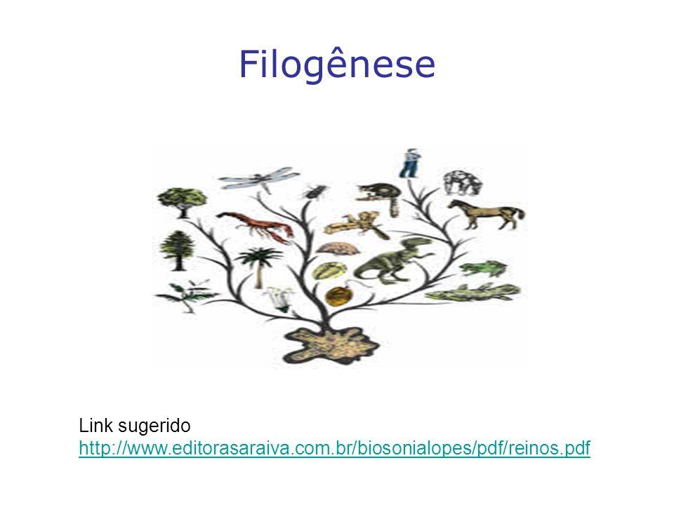 Filogênese Link sugerido http://www.editorasaraiva.com.br/biosonialopes/pdf/reinos.pdf