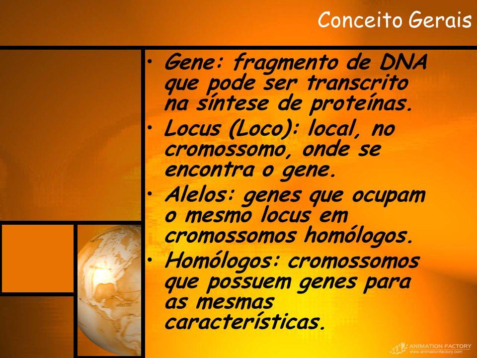 Conceito Gerais Gene: fragmento de DNA que pode ser transcrito na síntese de proteínas. Locus (Loco): local, no cromossomo, onde se encontra o gene. A