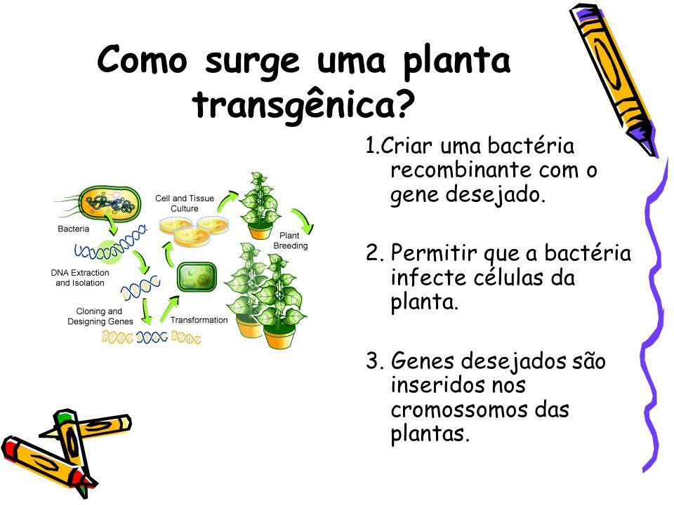 Como surge uma planta transgênica.1.Criar uma bactéria recombinante com o gene desejado.