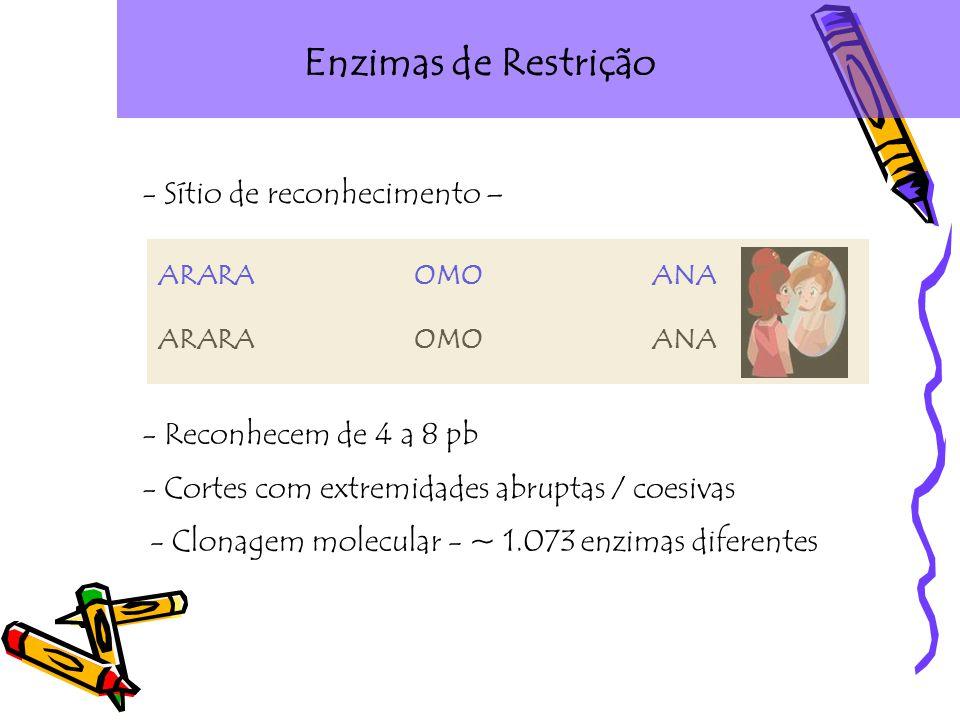 Enzimas de Restrição - Sítio de reconhecimento – ARARA OMO ANA - Reconhecem de 4 a 8 pb - Cortes com extremidades abruptas / coesivas - Clonagem molecular - ~ 1.073 enzimas diferentes