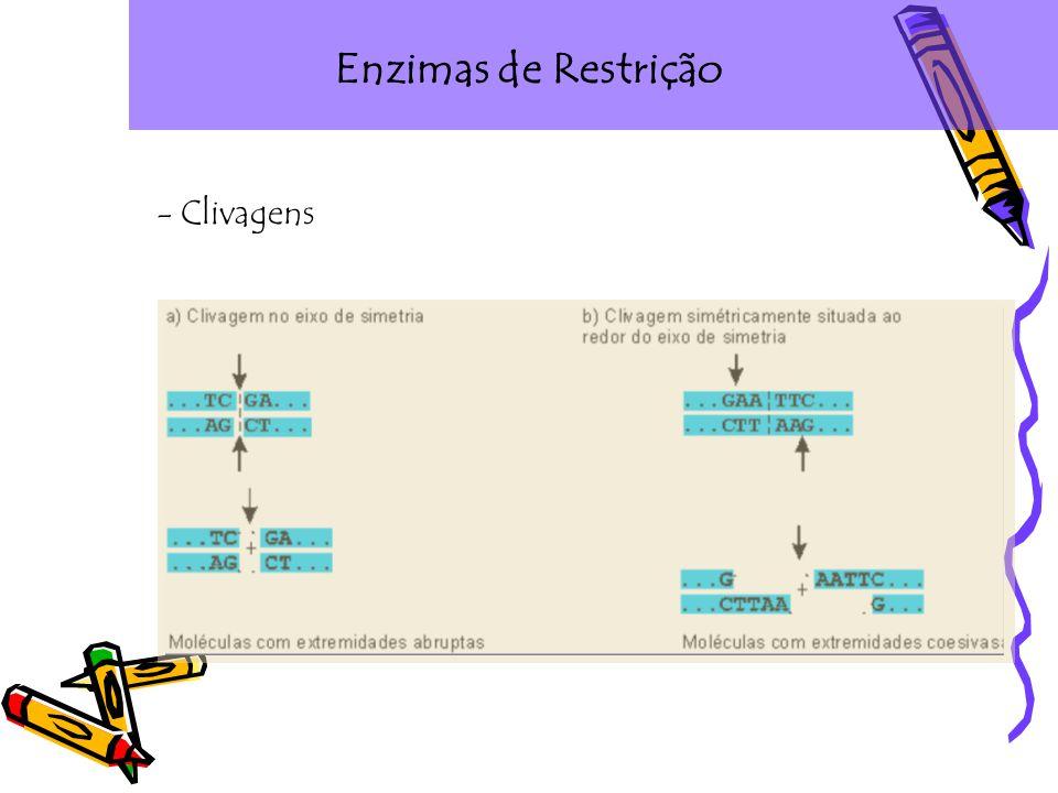 Enzimas de Restrição - Clivagens