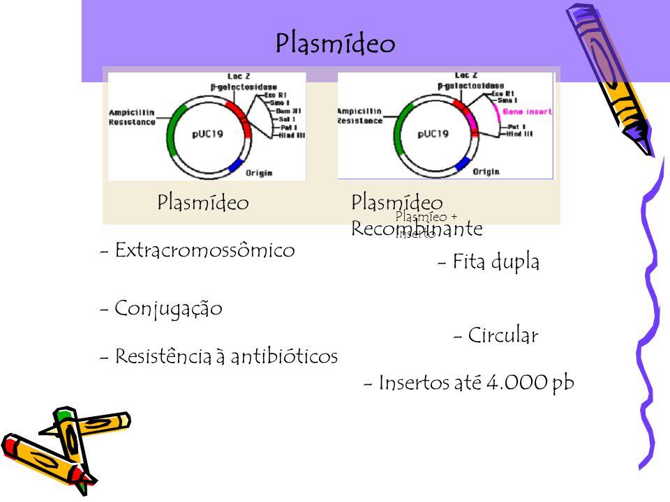 Plasmídeo - Fita dupla - Circular - Extracromossômico - Conjugação - Resistência à antibióticos - Insertos até 4.000 pb PlasmídeoPlasmídeo Recombinante Plasmíeo + Inserto