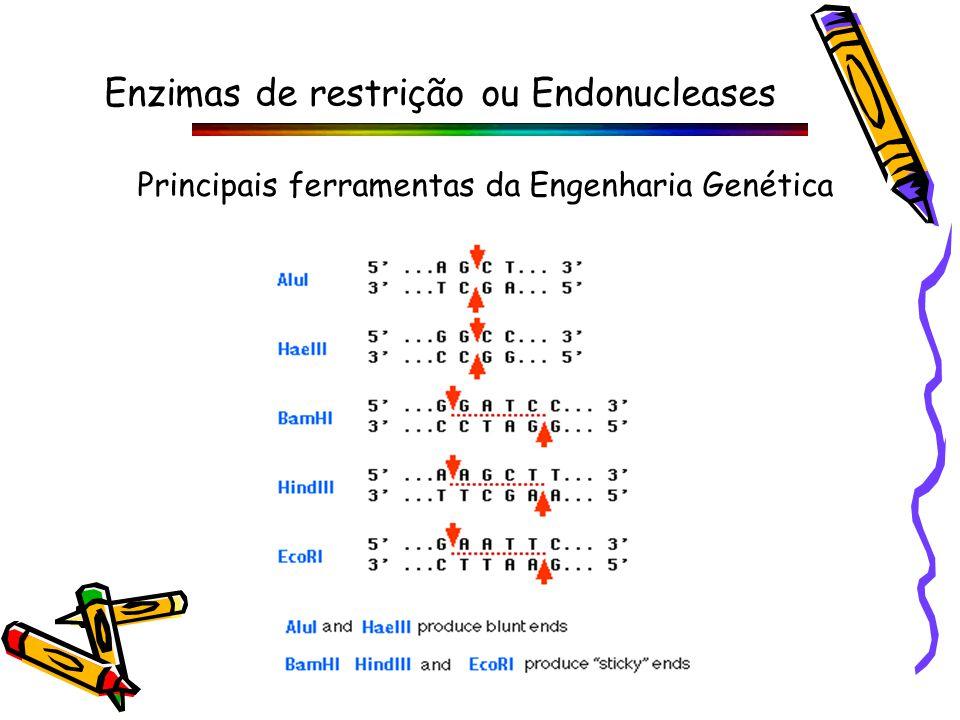 Enzimas de restrição ou Endonucleases Principais ferramentas da Engenharia Genética