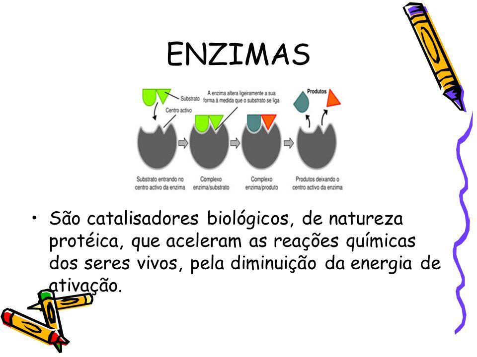 ENZIMAS São catalisadores biológicos, de natureza protéica, que aceleram as reações químicas dos seres vivos, pela diminuição da energia de ativação.