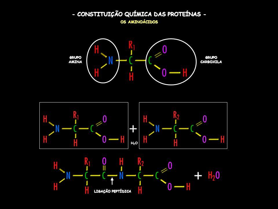 - CONSTITUIÇÃO QUÍMICA DAS PROTEÍNAS - OS AMINOÁCIDOS H2OH2O LIGAÇÃO PEPTÍDICA GRUPO CARBOXILA GRUPO AMINA