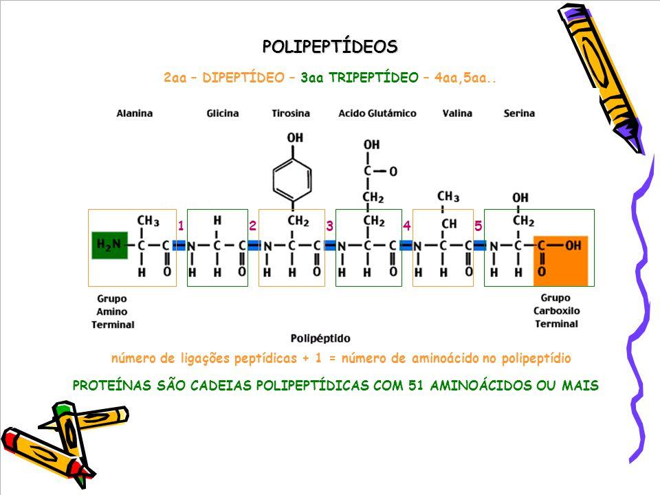 POLIPEPTÍDEOS 32154 número de ligações peptídicas + 1 = número de aminoácido no polipeptídio PROTEÍNAS SÃO CADEIAS POLIPEPTÍDICAS COM 51 AMINOÁCIDOS OU MAIS 2aa – DIPEPTÍDEO – 3aa TRIPEPTÍDEO – 4aa,5aa..