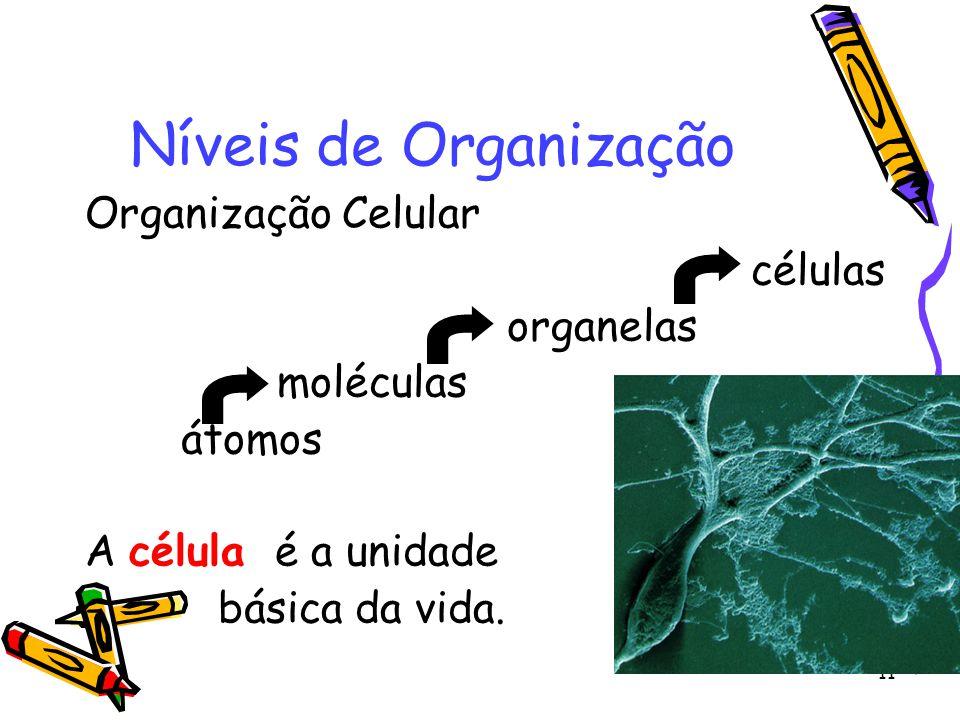 11 Níveis de Organização Organização Celular células organelas moléculas átomos A célula é a unidade - básica da vida.