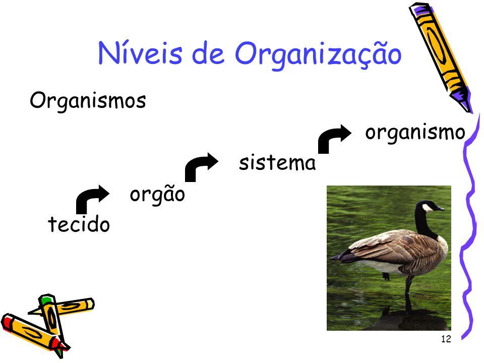 12 Organismos organismo sistema orgão tecido Níveis de Organização