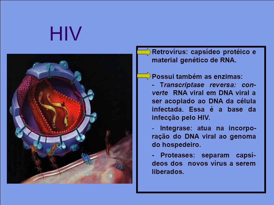 HIV Retrovírus: capsídeo protéico e material genético de RNA. Possui também as enzimas: - Transcriptase reversa: con- verte RNA viral em DNA viral a s