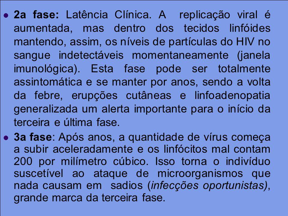 2a fase: Latência Clínica. A replicação viral é aumentada, mas dentro dos tecidos linfóides mantendo, assim, os níveis de partículas do HIV no sangue