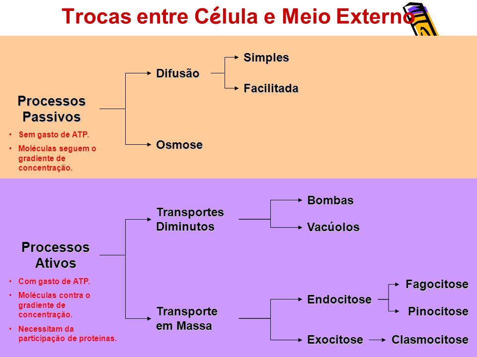 Trocas entre C é lula e Meio Externo Processos Passivos Processos Ativos Difusão Simples Facilitada Osmose Bombas Vacúolos Transporte em Massa Endocitose Exocitose Transportes Diminutos Fagocitose Pinocitose Clasmocitose Sem gasto de ATP.