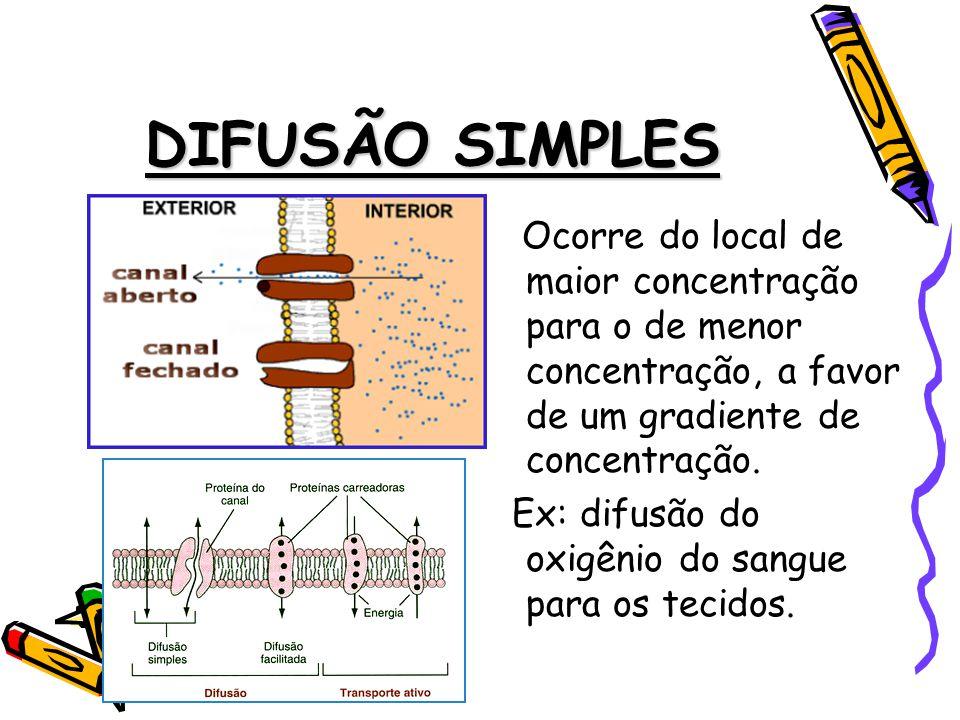 DIFUSÃO SIMPLES Ocorre do local de maior concentração para o de menor concentração, a favor de um gradiente de concentração.