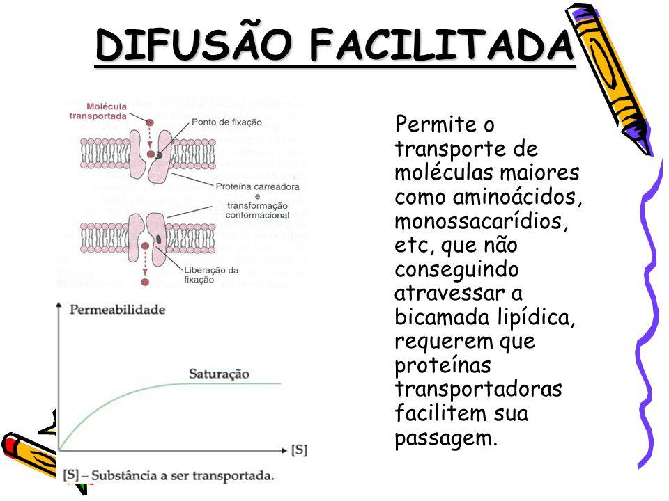 DIFUSÃO FACILITADA Permite o transporte de moléculas maiores como aminoácidos, monossacarídios, etc, que não conseguindo atravessar a bicamada lipídica, requerem que proteínas transportadoras facilitem sua passagem.