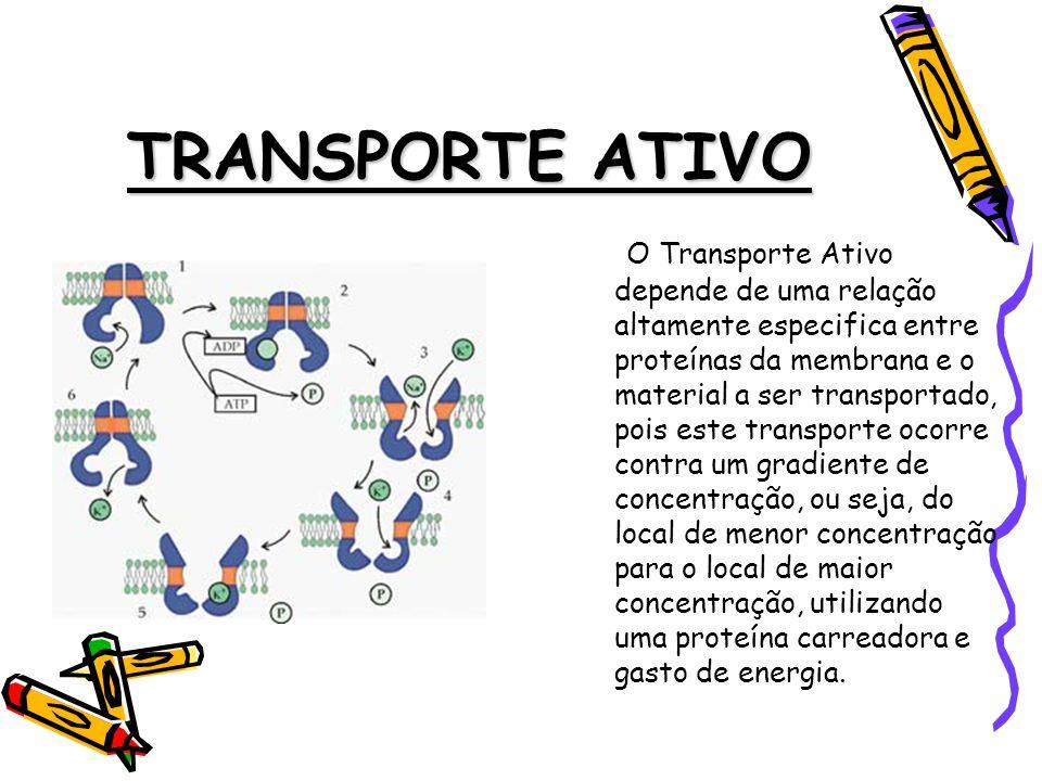 TRANSPORTE ATIVO O Transporte Ativo depende de uma relação altamente especifica entre proteínas da membrana e o material a ser transportado, pois este transporte ocorre contra um gradiente de concentração, ou seja, do local de menor concentração para o local de maior concentração, utilizando uma proteína carreadora e gasto de energia.