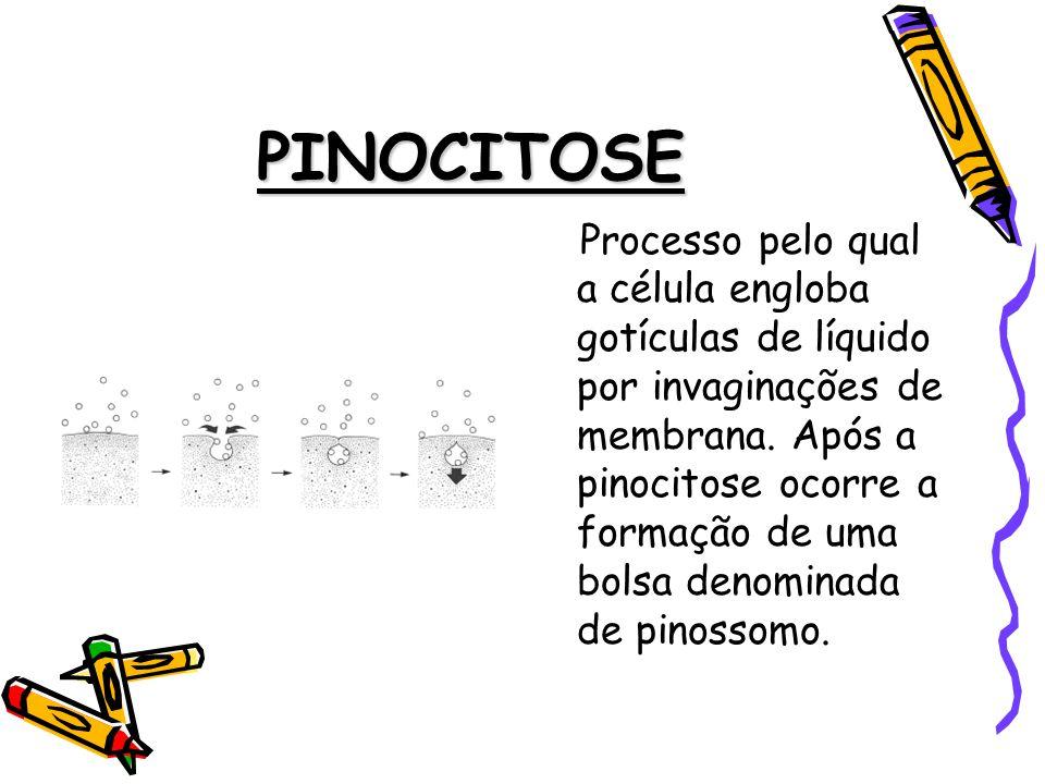 PINOCITOSE Processo pelo qual a célula engloba gotículas de líquido por invaginações de membrana.