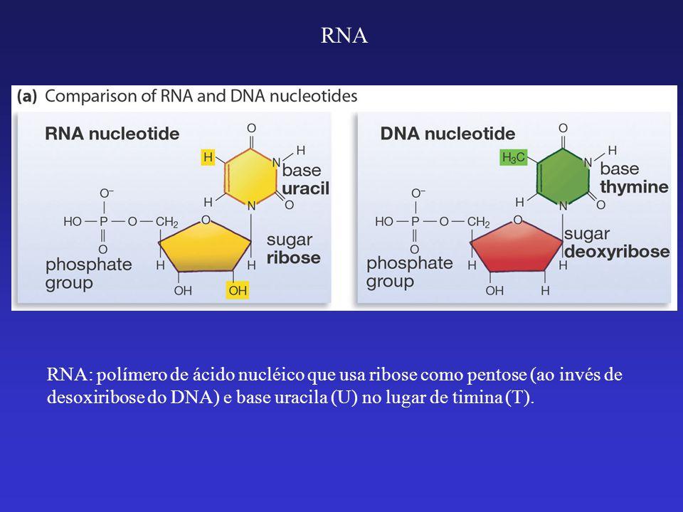 RNA: cadeia de fita única ou simples