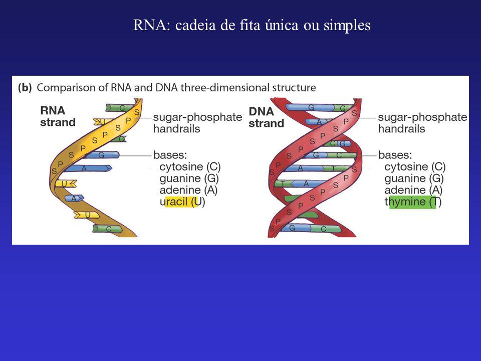 Há 3 tipos diferentes de RNAs com diferentes funções: