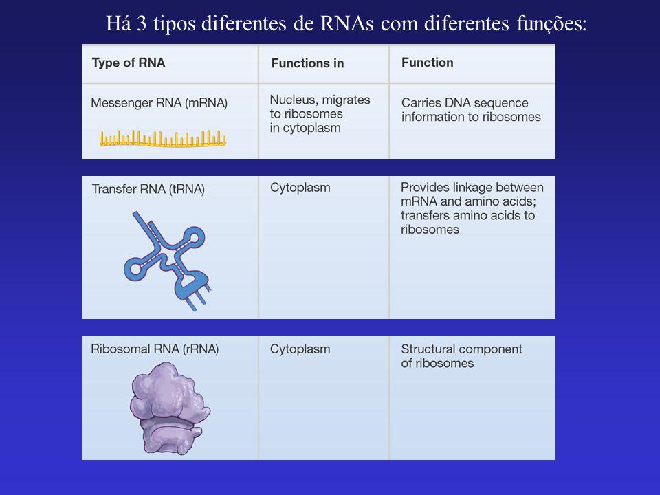Transcrição A enzime RNA polimerase abre as cadeias de DNA e sintetiza um RNA complementar a apenas uma dessas cadeias do DNA (gene).