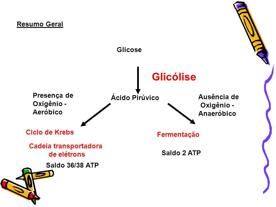 Queima experimental da glicose (combustão) Energia liberada a partir de glicose (como calor e luz) 100% Energia liberada a partir de glicose (formando