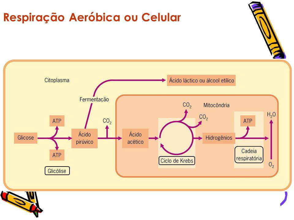 Resumo Geral Glicose Ácido Pirúvico Glicólise Presença de Oxigênio - Aeróbico Ausência de Oxigênio - Anaeróbico Ciclo de Krebs Cadeia transportadora d