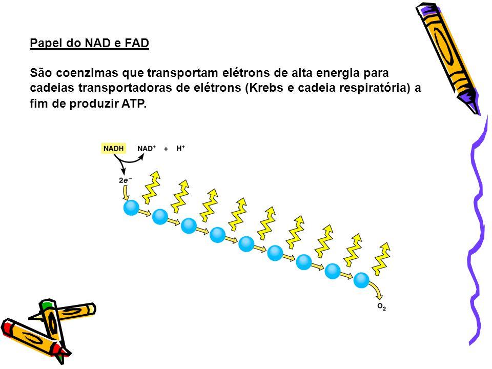 Qual o papel do NAD e do FADH?? Eles são carregadores energéticos! São coenzimas que auxiliam a liberação de energia na forma de ATP pela célula aos p