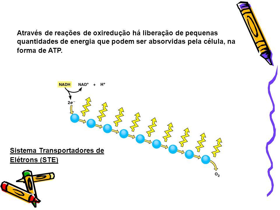 Papel do NAD e FAD São coenzimas que transportam elétrons de alta energia para cadeias transportadoras de elétrons (Krebs e cadeia respiratória) a fim